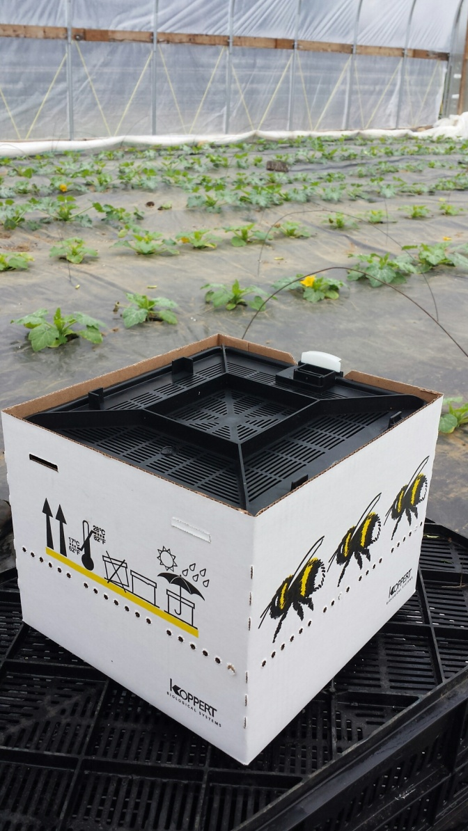 The shipping hive set up and open in the greenhouse.